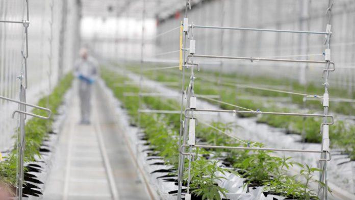 Despenalización-marihuana-Oregón
