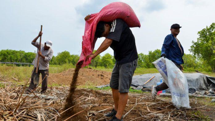 Para conseguir dinero del programa Sembrando Vida campesinos queman árboles