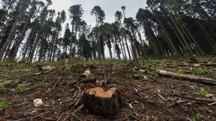 Talamontes que deforestan el país rebasan capacidad del Estado para detenerlos